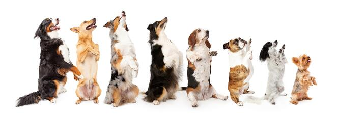 A row of singing dogs illustrates the importance of integrating all marketing channels..