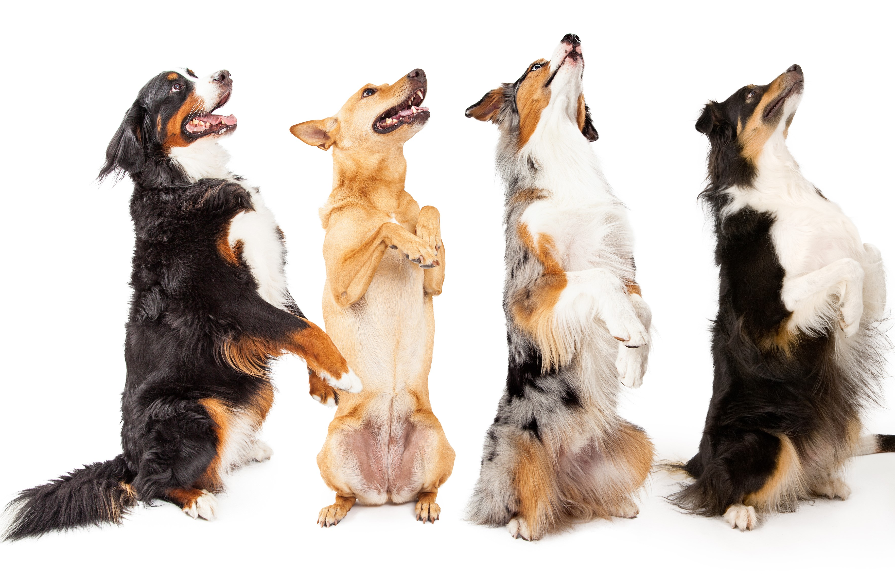 Singing dogs illustrate integrating marketing across media types